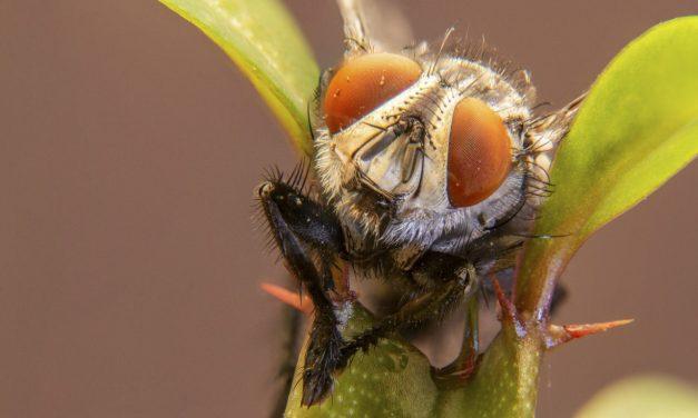 La cara, la ceca y las moscas