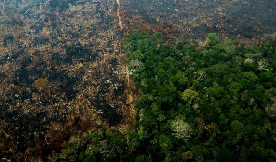 La Amazonia en venta